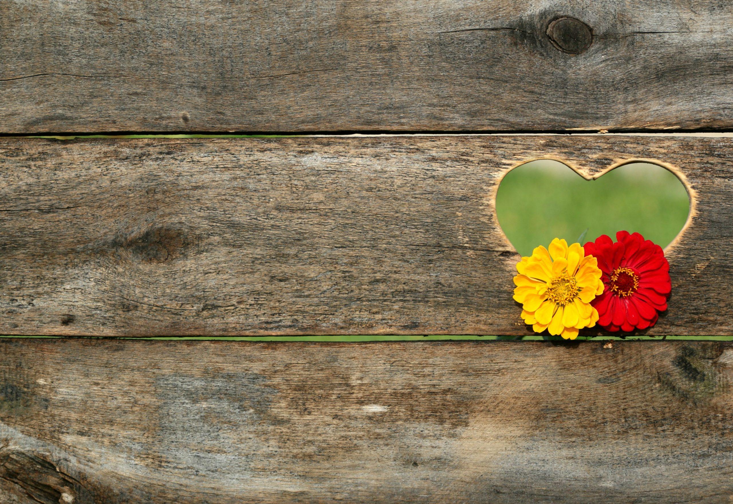 blomster-hjerte-roed-gul-trae-planker