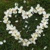 blomster-hvide-hjerte-graes-hjerteformet